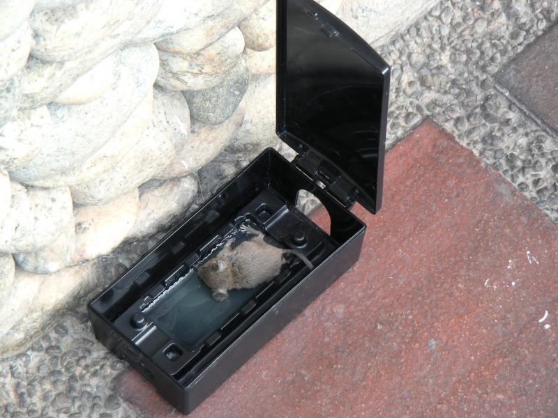 Tecnicas de aplicaciones fumigadaza - Cebos para ratones ...